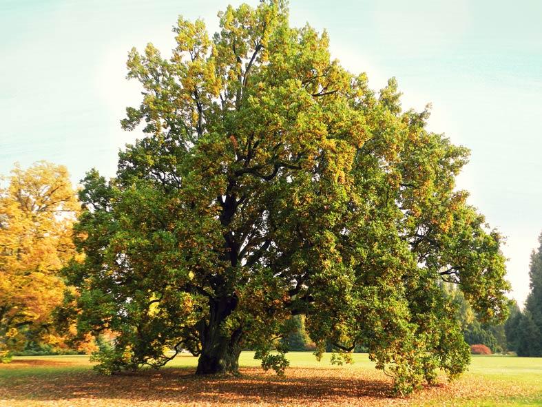 Homoeopathiepraxis Baum